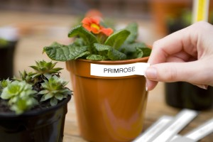 Ideal labelling solution for your garden